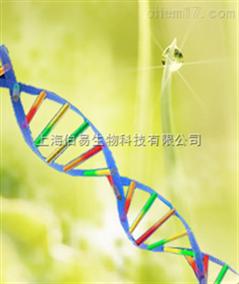 NFkB(p65)过度表达稳定细胞系