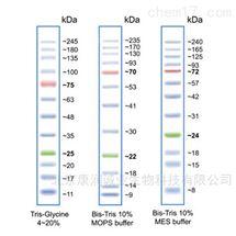 彩色预染宽范围蛋白电泳/核酸电泳