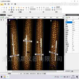 玉米考种分析系统
