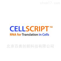 美国cellscript试剂盒