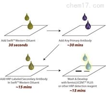 786-679G-Biosciences SwiftWestern染色试剂稀释液
