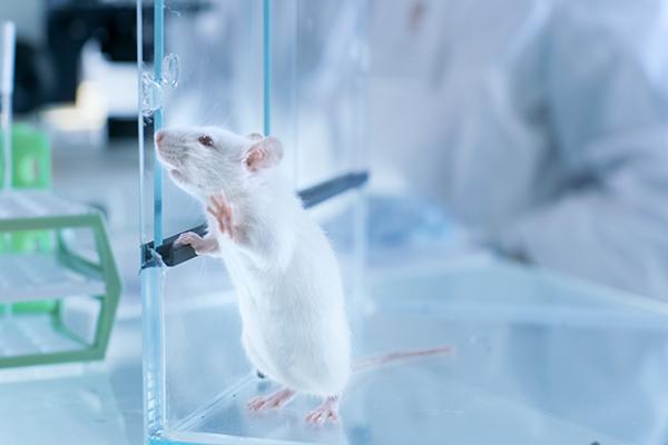 实验动物管理条例修订草案征求意见  规范管理提上日程