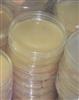布鲁氏菌选择性培养基